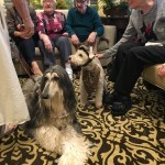 Residents are asking about the biggest dog in the group, Zachary, who is very shy Afghan Hound.